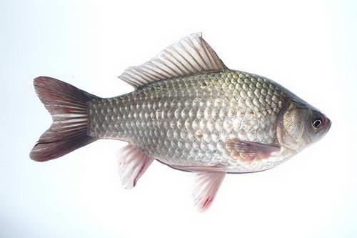 рыбалка на тетрухе